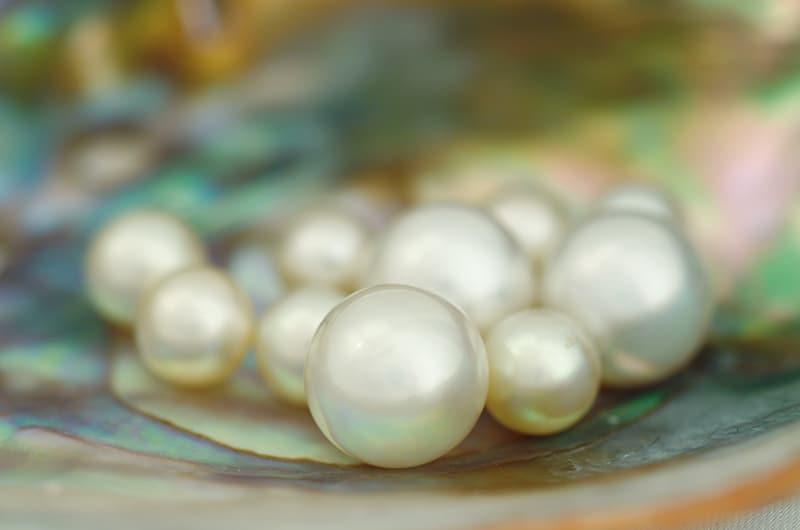 Perle des mers du Sud